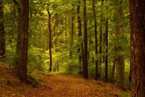 miško atsodinimas